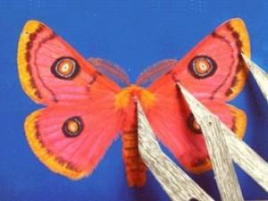 Moth01