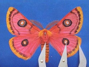 Moth05