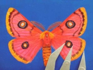Moth06