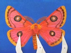 Moth07