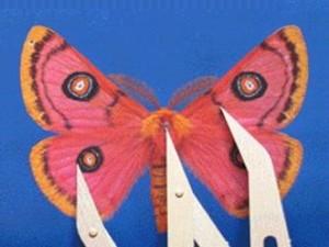 Moth08