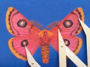 Moth09