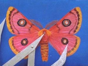 Moth11