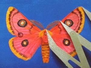 Moth12