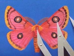 Moth02