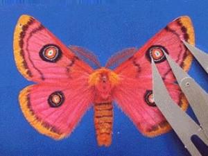 Moth04